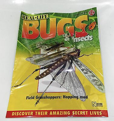 National Geographic Real-life Bugs & Insects #22 Field Grasshoppers (XXL)