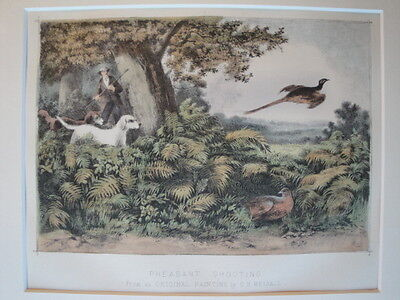 Pheasant Shooting HUNTING Original Hand COLOUR LITHOGRAPH Print c1865 fm Weigall