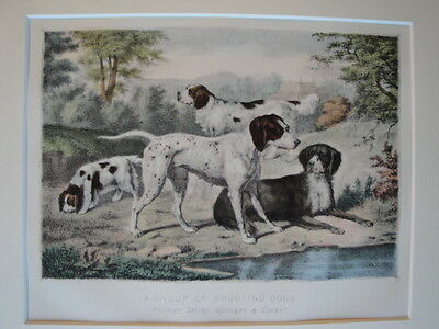 Shooting Dogs Original Hand COLOUR LITHOGRAPH Print c1865 Pointer Setter Cocker