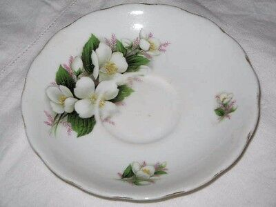 Royal Vale Bone China White Roses Green Leaves Saucer Gold Rim 14cm Wide