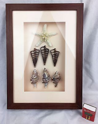 Natural Sea Shell Picture in Glass Frame Original Artwork Shadow Box Home Decor