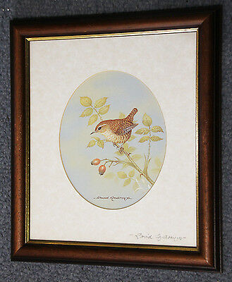 Beautiful original signed David Andrews print of a Wren