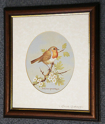 Beautiful original signed David Andrews print of a Robin