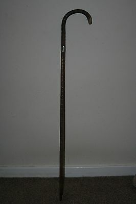 Silver collared cane - walking stick