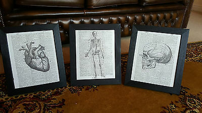 Vintage Feature Wall Book Art Prints Anatomy Skull Skeleton Goth Steampunk x3