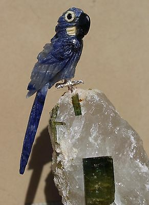 """Hyacinth Macaw on Tourmaline in Quartz  5 1/4"""" by -Peter Muller"""