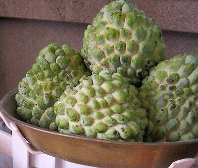 Fresh Custard Apple x20 Seeds - Free Postage