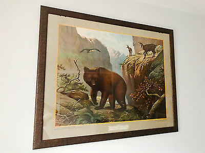 Vintage Framed Poster Netherlands Of A Bear  Mid-Century One Pair Antique Retro