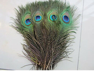 10 beautiful peacock feathers eyes natural color 25-30 cm