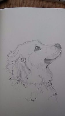 Dog, 'Tilly', small original pencil drawing of a golden retriever  by Jan Hicks