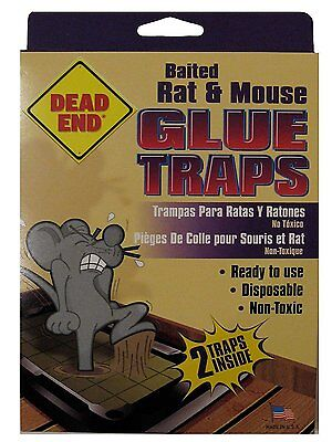 Dead End Baited Rat and Mouse Glue Traps. Non-toxic, Ready to Use, 2 Traps