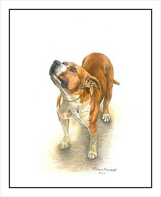 "American Staffordshire Terrier ""All American"". Original MATTED 16x20 Art Print."