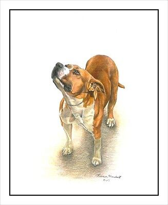 "American Staffordshire Terrier ""All American"". Original 8.5x11 Art Print."