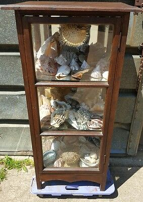 Large cased collection of shells