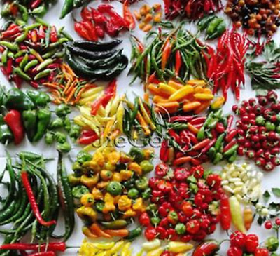 100 Pcs/bag Mixed Pepper Seeds Different of Vegetables Non-Gmo Vegetable Seeds