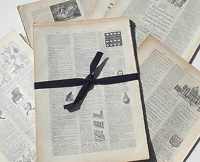Bundle Antique French Book Pages Dictionary aged 1940s Illustrated sheets