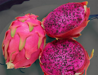 15 X RED DRAGON FRUIT Seeds Rare Exotic Plant FREE SHIPPING