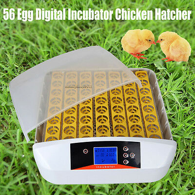 Digital Fully 56 Eggs Incubator Automatic Egg Turner Poultry Chicken Duck Bird