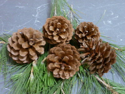 15 LARGE PINE CONES *Multiple Quantity Deal* Great for Christmas decorations