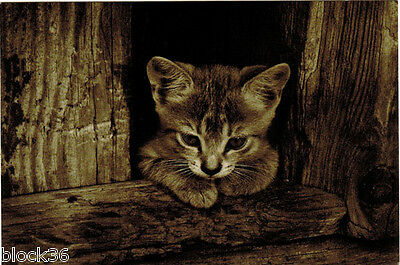 VERY LITTLE KITTEN WITH VERY DEEP THOUGHTS... Modern Russian card