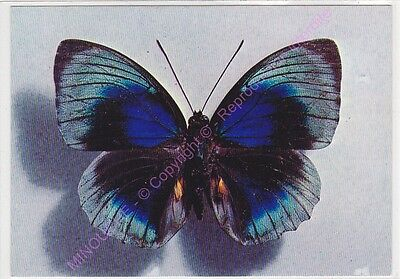 Cpsm Photo Papillons Butterflies Agrias Beata Male Perou