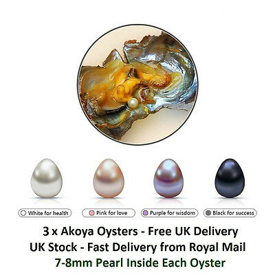 3 Akoya Oysters With Large 7-8mm Oval Pearl Inside - Pearl Party Gift