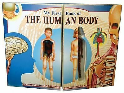 My First Book of the Human Body by Grandreams Ltd (Hardback, 2006)