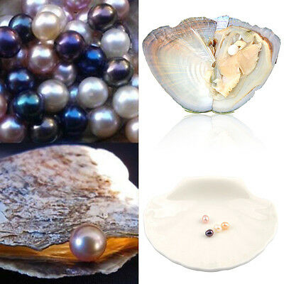 7.5-8MM Wholesale 10pcs Akoya Oysters with Cultured Pearls Inside Birthday Gift