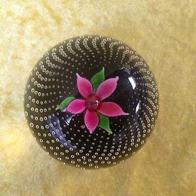 Caithness Glass FLOWER IN THE RAIN Lampwork Paperweight