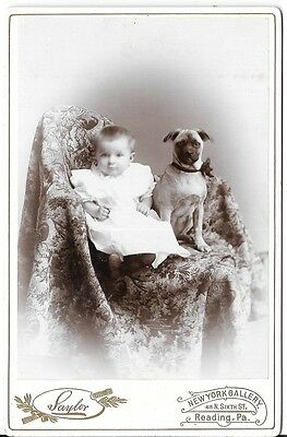 Excellent Antique Cabinet Card Image of Young Boy with Dog