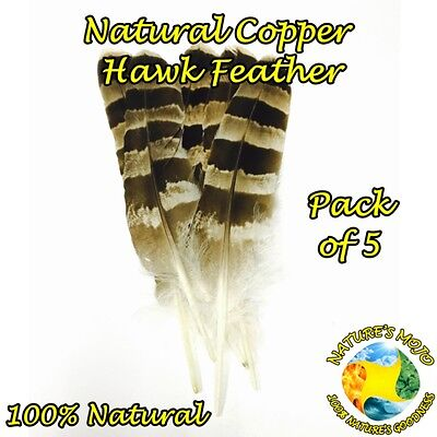 Copper Hawk Natural Feather - Pack of 5