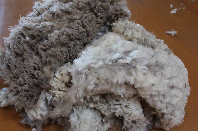Raw Lambs wool Merino 1.5kg white