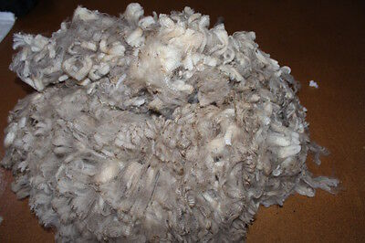 Raw wool Merino 1.5kg white 100mm staple