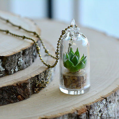 Real Rose Succulent Plant Necklace, Antique Bronze Chain Pendant Dome Terrarium