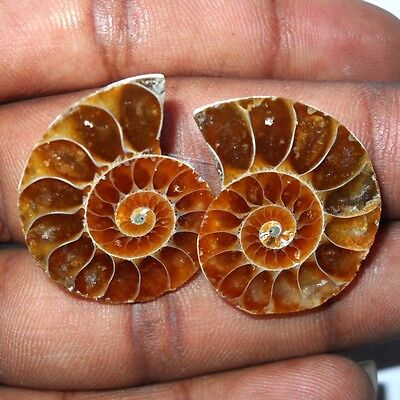 31 Ct. Earth Mined Ammonite Fossil Matched Pair 2 Pc Gemstone Cab Sz-23X20X5 Mm.