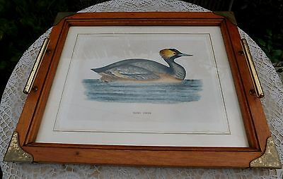 Vintage ABERCROMBIE FITCH Wood Brass Serving Tray Eared Grebe Etching Italy Rare