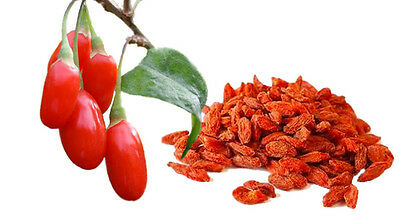 100 GOJI BERRY SEEDS 2018 (all non-gmo heirloom vegetable seeds!)