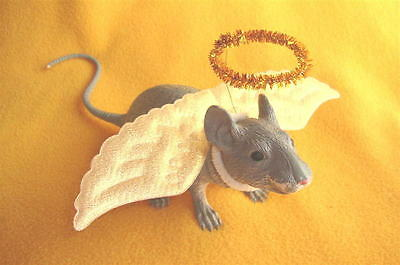 Angel Costume for Rat from Petrats