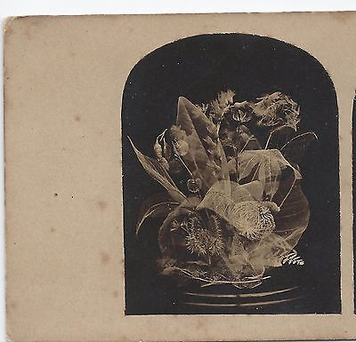 """Stereo Stereoview Genre Still Life (""""Beautiful in Death"""") 1850er"""