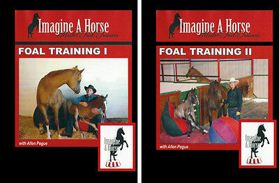 DVD Ultimate Foal Training - Horse Halter Breaking Handling Trick
