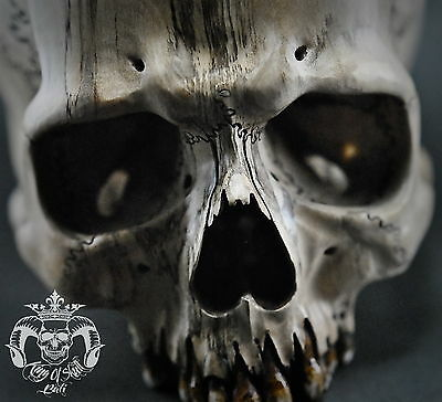 Bigger Than Live Size Hand Carved Human Skull Jawless Prickly Ash Wood Oddities