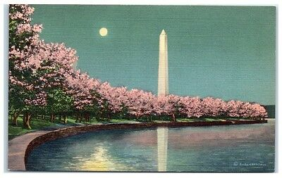 Mid-1900s Cherry Blossoms and Tidal Basin by Moonlight, Washington, DC Postcard