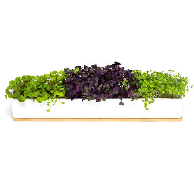 NEW Urban Greens Microgreens Window Sill Kit