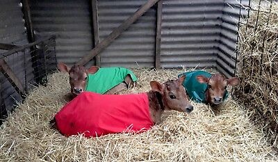 ICU Small Animal Rugs - Calf Rug/Blanket / Coat/ Cover in aid of unwell calves