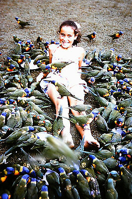 35mm Colour Slide Girl Surrounded by Lorikeets Australia Circa 1970's
