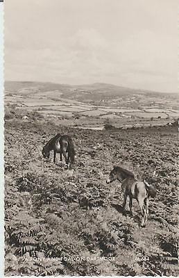 Dartmoorr - A Pony And Foal -  Real Photo Postcard # Rp