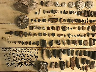 Nice fossil lot, Several species, Great for school or collection, MAKE OFFER!