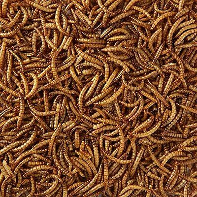 Dried Mealworms, Top Quality, All Sizes Wild Bird Dried Mealworm, FREE UK Post