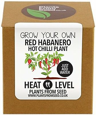Plants From Seed Grow Your Own Habanero Chilli Plant Kit