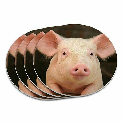 Little Pig Piggy Coaster Set